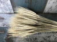 "100 STEMS DRIED WHEAT-RYE FLOWERS ARRANGEMENT NATURAL STRAW COLOUR BOUQUET 20"""