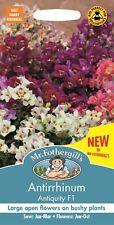 Mr Fothergills - Flower - Antirrhinum Antiquity F1 - 50 Seeds