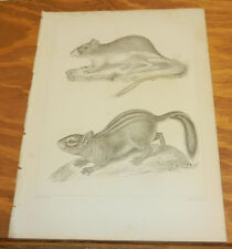 1860 Antique Print/Mammals - Pouched Jumping Mouse & Cooper'S Ground Squirrel