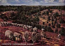 BF38505 luneburger heide  painting mallerisches idyl sheep mouton animal animaux