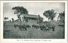South of TOPEKA, Kansas  KS   Cows at C.W. MERRIAM FARM  ca 1910s   Postcard