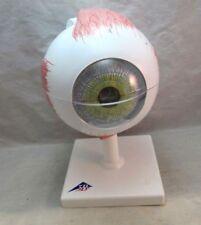 3B Scientific Eye Medical Model F10. Complete