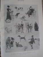 The Kennel Club Show at the Crystal Palace Ralph Cleaver 1902 print ref W2