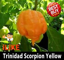 Trinidad Scorpion Moruga Seeds Yellow x 20 The Worlds Second Hottest Chilli