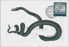 MAXIMU CARD - Fauna REPTILES snake : PORTUGAL 1967  #1