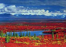 "Alaska Tundra, Anthony Cook, ""Alaska Tundra In Autumn Glory"", 18x26 image"