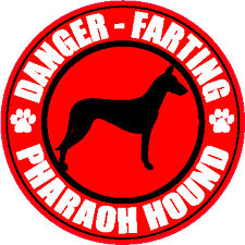 "Farting Pharaoh Hound Fart 5"" Dog Sticker"