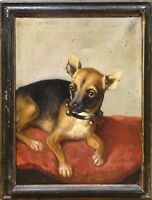 Fine 19th Century English School Chihuahua Dog Portrait Antique Oil Painting