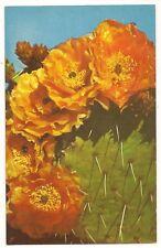 Prickly Pear Cactus Plant,Vintage Unused Postcard