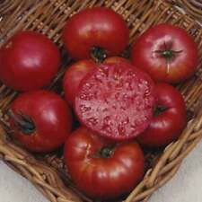 ORGANIC VEGETABLE TOMATO BEEFSTEAK MORTGAGE LIFTER 80 FINEST SEEDS