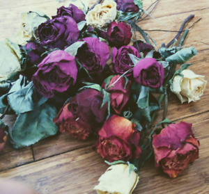 Whole Dried Rose Heads with Stems