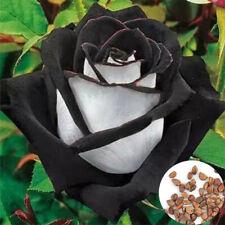 Lots 200Pcs Rare White + Black Rose Flower Plant Seeds Garden Seeds Decor PT70