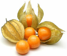 Fruit seed -Cape Gooseberry - Physalis edulis - Pack of 15 Seeds