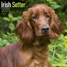 Irish Setter Calendar 2021 Premium Dog Breed Calendars