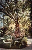 FRANKFURT Main 1910/20 Palmengarten Palmen Bäume Baum Postkarte Ansichtskarte