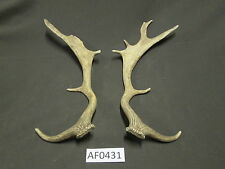 Pair of Fallow antlers for decorations lodge cabin decor Af0431