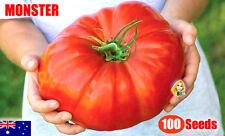 Belgium Monster Tomato Seeds Unusual Rare Fruit Giant Plant Heirloom 100 Seed
