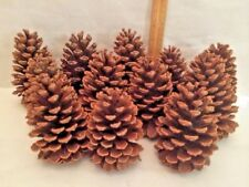12 Pine Cones 4-5 Inches Natural  North Carolina Long Leaf Pine