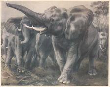 CHROMO ARTIS BELGIUM AFRICAN ELEPHANTS