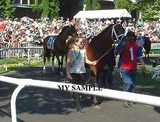 PALACE MALICE 8 by 10 PHOTO 2014 THE METROPOLITAN Horse Race BELMONT PARK #2