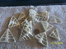 "15 thick center cut Troca sea shells size at widest aprox 3/4"" -2 inches <><"