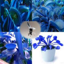 500pcs Blue Venus Flytrap Carnivorous Plant Dionaea Muscipula Giant Clip Seeds