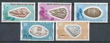 AFAR ET DES ISSAS (Djibouti) 1975-1976 - SHELLS - CONUS TAENIAUTUS etc. (5)Hk627