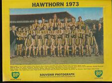 1973 BP Football Life Team Photo Hawthorn Hawks Souvenir Photograph