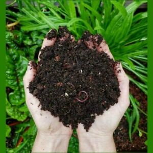 Organic Vermi Compost for Home Gardening Plant Booster 1Kg