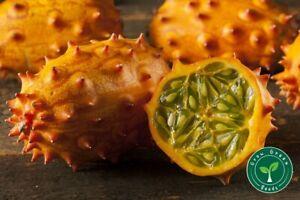 10 seeds of Kiwano - CUCUMIS METULIFERUS - Jelly Melon + GIFT 5 seeds Sunflower