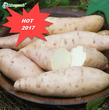 50PCS Sweet Potato seed The sweetest we've ever tasted Fruit and Vegatable seeds