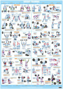 Bodybuilding Weight Training  Poster Exercise Chart