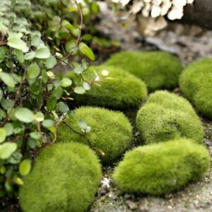 Miniature 1pc Stone Moss Garden Craft Fairy Bonsai Plant Decor Marimo Stone