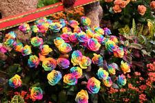 200Pcs Colorful Rainbow Rose Flower Seeds Home Garden Plants Multi-Color Rose