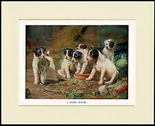SMOOTH FOX TERRIER PUPS CATCH A RAT DOG PRINT MOUNTED READY TO FRAME
