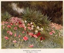 "Original 1928 Antique Flower Print ""Border Carnations"" Authentic Vintage Botany"