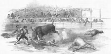 España. - Lucha de Toro, Madrid-accidente a Montes, Matador, antiguo de impresión, 1850