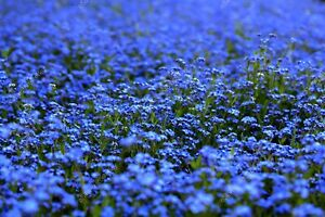 Blue waves flowers spring blossoms DIGITAL ART PHOTO PICTURE JPEG BACKGROUND