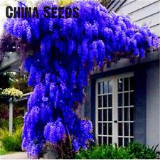 Wisteria Bonsai Bonsais Seeds Plants Tree Garden Ornamental Rare As 10pcs/bag