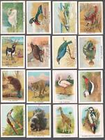 1923 ITC C1 Birds, Beasts & Fishes Tobacco Cards Complete Set of 50