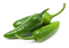 CHILI PEPPER HOT Jalapeno Green Early - ORGANIC/BIO -  50 Seeds
