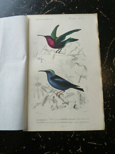 Hummingbird - D' Orbigny D' Histoire Naturelle, published Paris ca:1840 PL 5