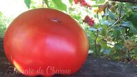10 graines de tomate rare Babushkino-De MAMIE saveur excellente heirloom tomato