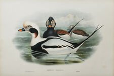 ORIGINAL Hand Colored Lithograph By John Gould/Birds of Great Britain