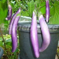 10 Samen Pingtung Long Aubergine – bis zu 30cm lange Früchte