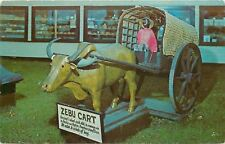 Belfast Maine~Perry's Tropical Nut House~Zebu Cart of India~1950s PC