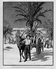 PLANTING PALM TREES AT THE WORLDS FAIR IN NEW ORLEANS EXPOSITION DONKEY CART