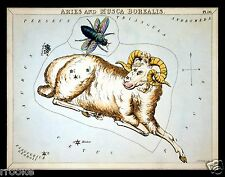 ARIES and Musca Borealis March April Constellation ZODIAC ASTRONOMY Astrology