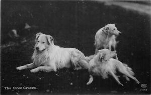 C-1910 Golden Retriever Dogs Three Graces Schwerdtieger Postcard 20-1450