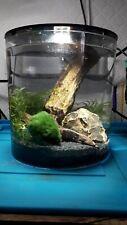 Self sustaining Eco system Aquarium! Cherry Shrimp Tank - Snail Aquarium
